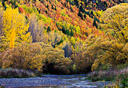 Fall colors in Arrowtown, New Zealand.